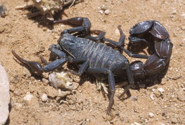 Добро пожаловать в царство скорпионов